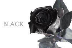 BLACK-UNIDAD-CAPTION