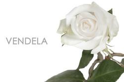 VENDELA-UNIDAD-CAPTION