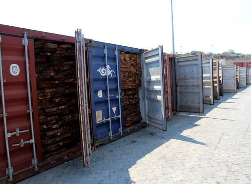 Contrabando de madeira continua