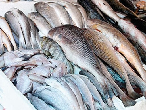 Mozambican fisheries exports slumped by 56 per cent in 2020