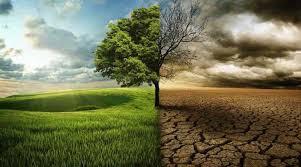 'Perseguindo Unicórnios de Carbono'