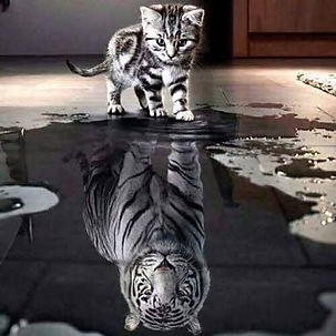 your-reflection.jpg