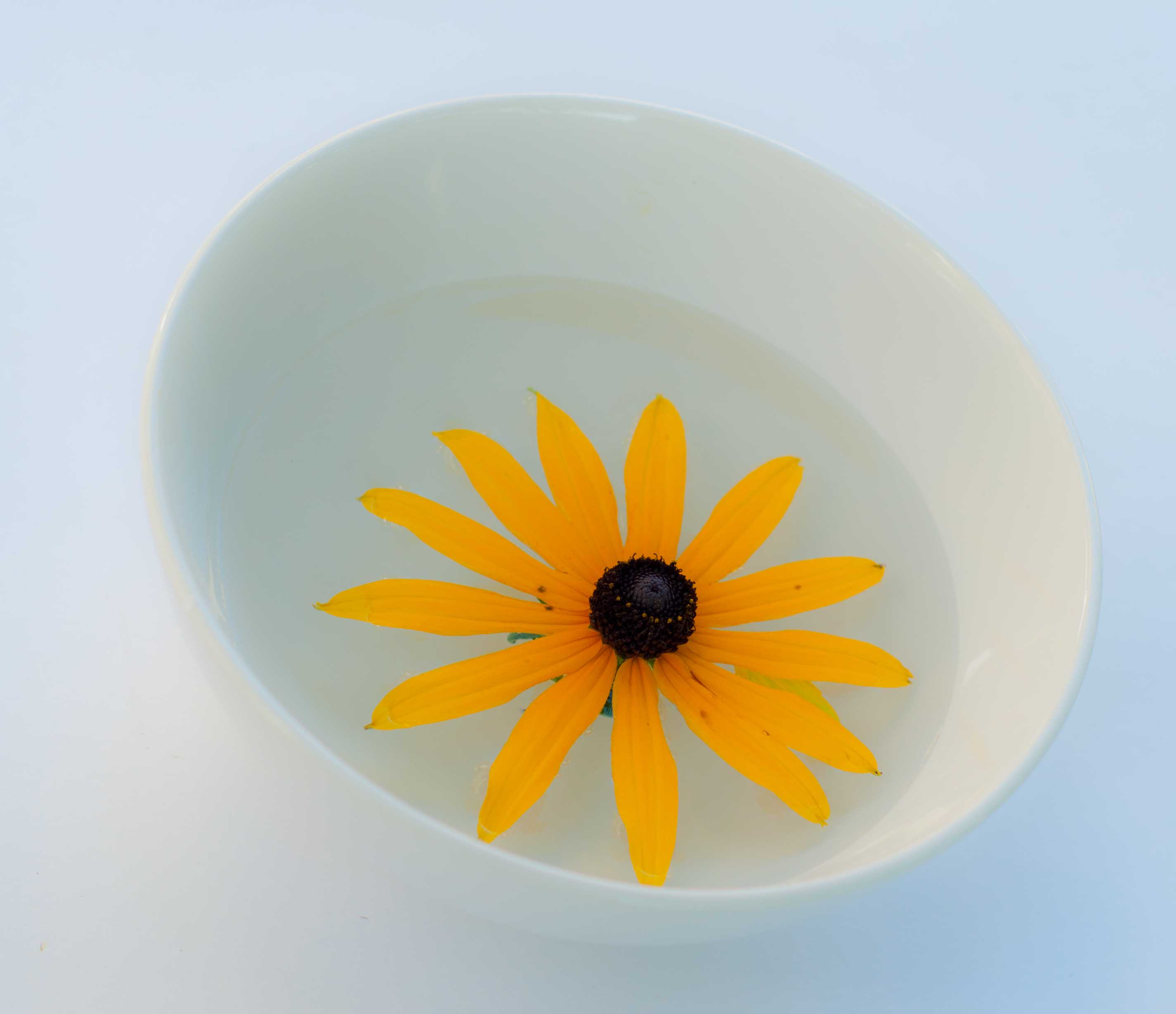 Flower in bowl.jpg