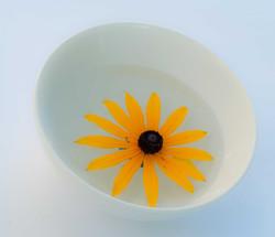 Flower in bowl.jpg