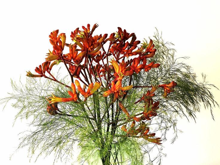 Exemplo de Bouquet S