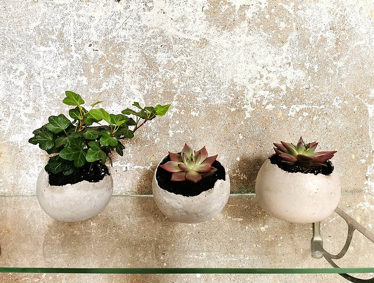 Ovos da Concreto Design com planta