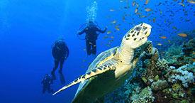 Fujairah Diving.jpg