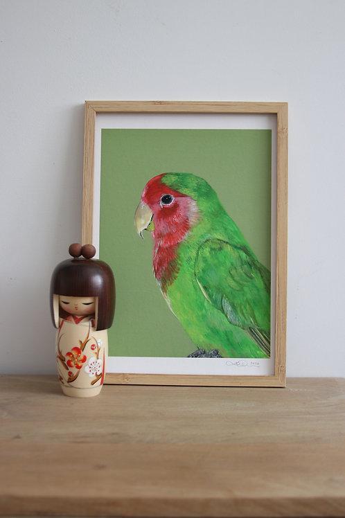 Lovebird Fine Art Print