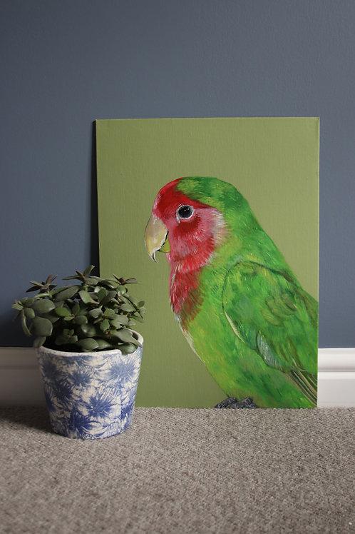 Lovebird Original