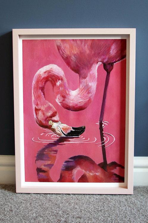 Flamingo Reflection Fine Art Print