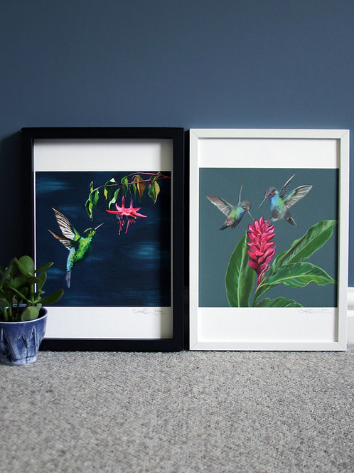 2 x Hummingbird Fine Art Prints