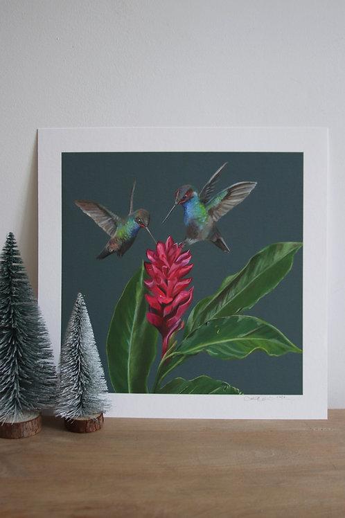 Hummingbirds Fine Art Print