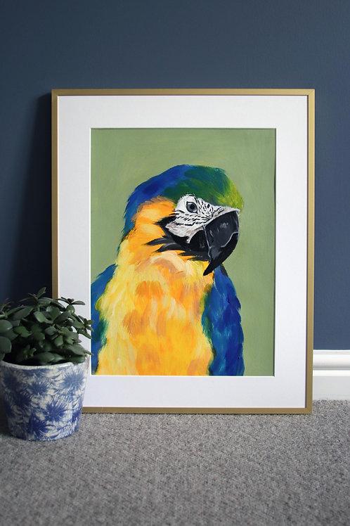Macaw Original