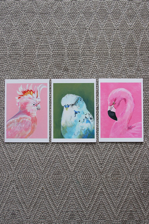 3 x A5 Bird Fine Art Prints