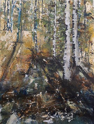 Through the Birch Forest