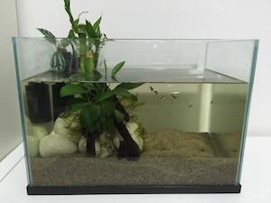 オーストラリアで熱帯魚を飼う