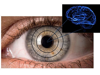 eye and brain.jpg