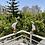 Thumbnail: זוג ציפורי נוי לעיצוב המרפסת -  01
