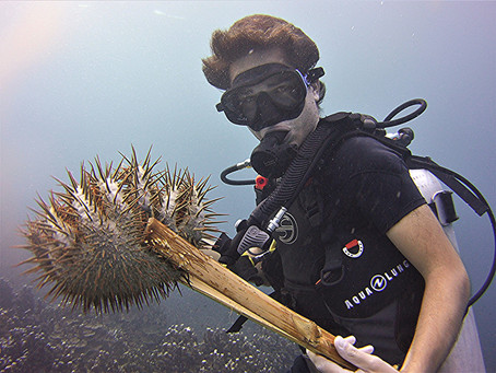 Removing Coral Attack of Crown of Thorns