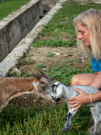Matobiai village goats
