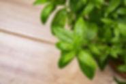 peppermint-herb-1475508088uSK.jpg