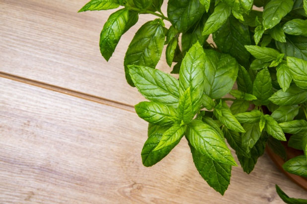 peppermint-herb-1475508088uSK.jpg
