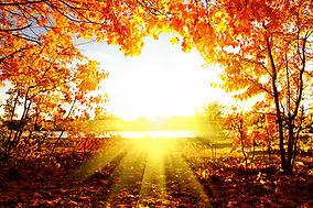 autumn sun through trees
