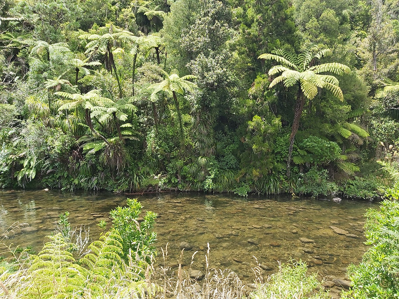 New Zealand native bush and river