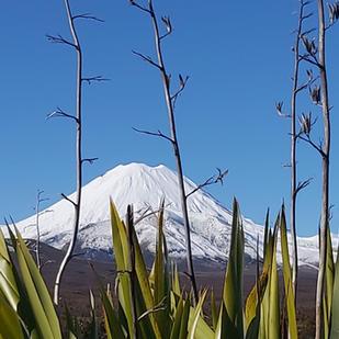 Mount Ngarahoe through harakeke