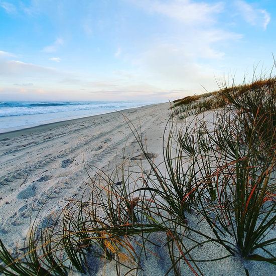 Beach scene with white sand and beach grass