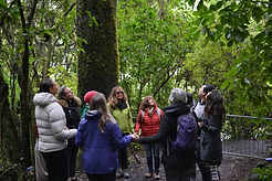 Group of women holding hands in a circle in NZ native bush