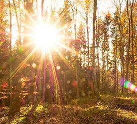 Autumn sunshine through trees