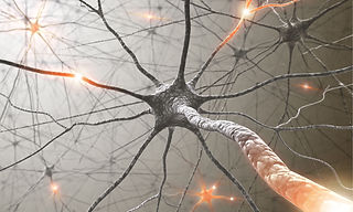 Brain-neurons-014.jpg