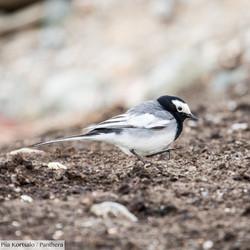Birds of Sarychat-Ertash, Kyrgyzstan