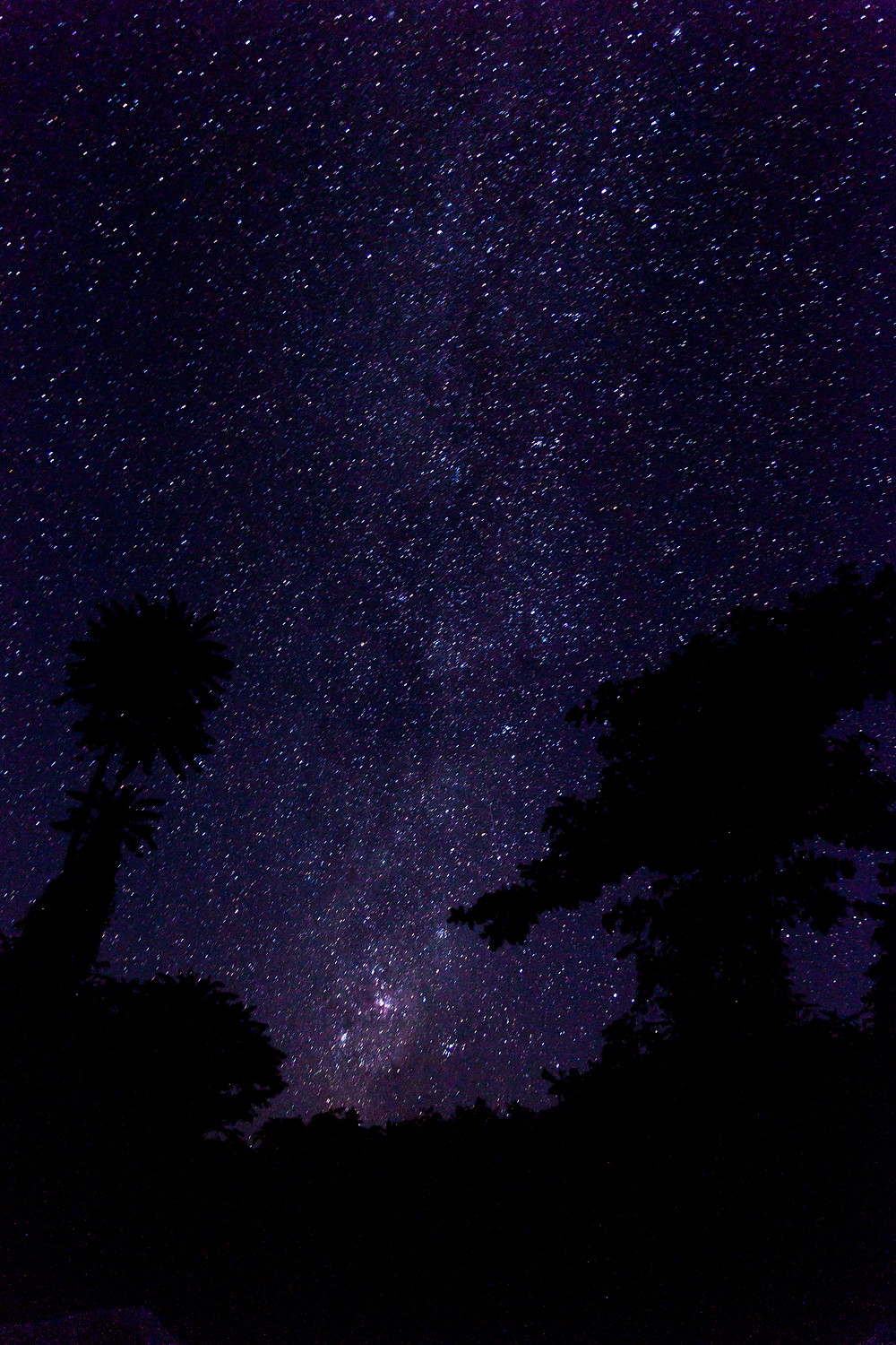 Sulawesi: Castaways - forest galaxies.