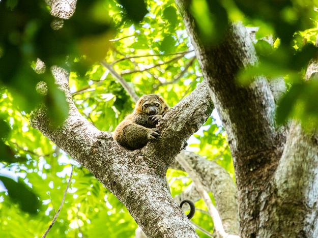 Indonesia, Sulawesi - Tangkoko National park