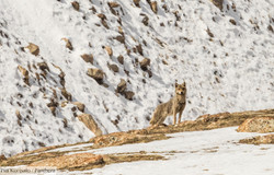 Animal Kingdom of Sarychat-Ertash, Kyrgyzstan