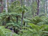 Fairy Dell Reserve