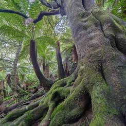 Emerald rainforest.jpg