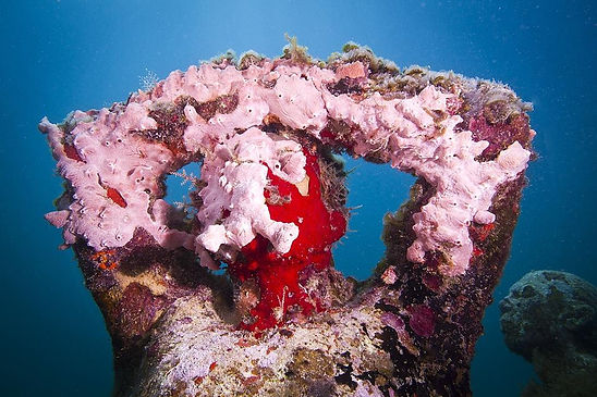 Silent-Evolution_Mexico_coral_pink_03_Ja