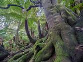 Emerald Rainforest