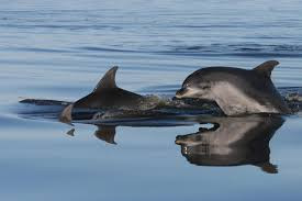 Burranung Dolphins