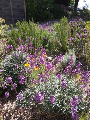 fleurs Gîte Rustique