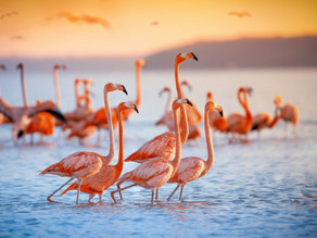 The Bird Is The Word: Help Us Adopt A Flamingo