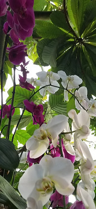 Welcome To The Jungle by Shari P Kantor spkcreative.com white and purple orchids