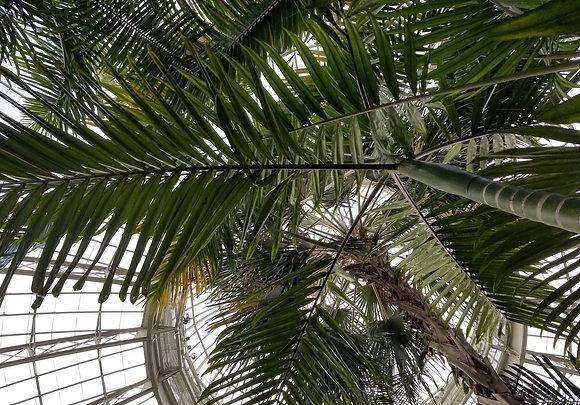 Climb Me by Shari P Kantor spkcreative.com indoor palm trees photograph