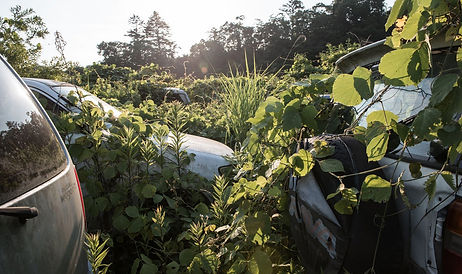 Overgrown cars close.jpg