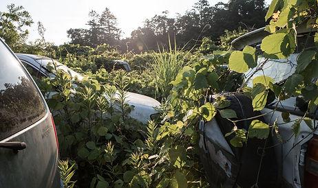 Overgrown cars close.jpg