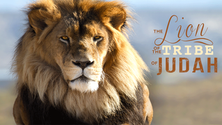 The Lion Of The Tribe Of Judah Is Sounding The Alarm For Action!