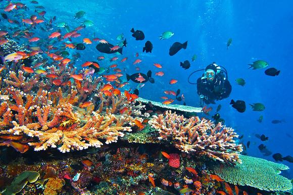 7 Motivos para ser Mergulhador